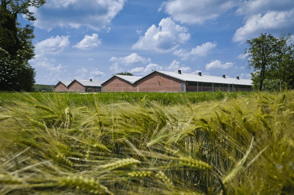 Csicsó farm